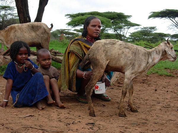 Die Ziegen helfen, die Ernährung zu sichern.Caritas international